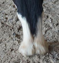 enge Hufstellung Pony
