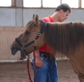 entspannte Pferde lachen