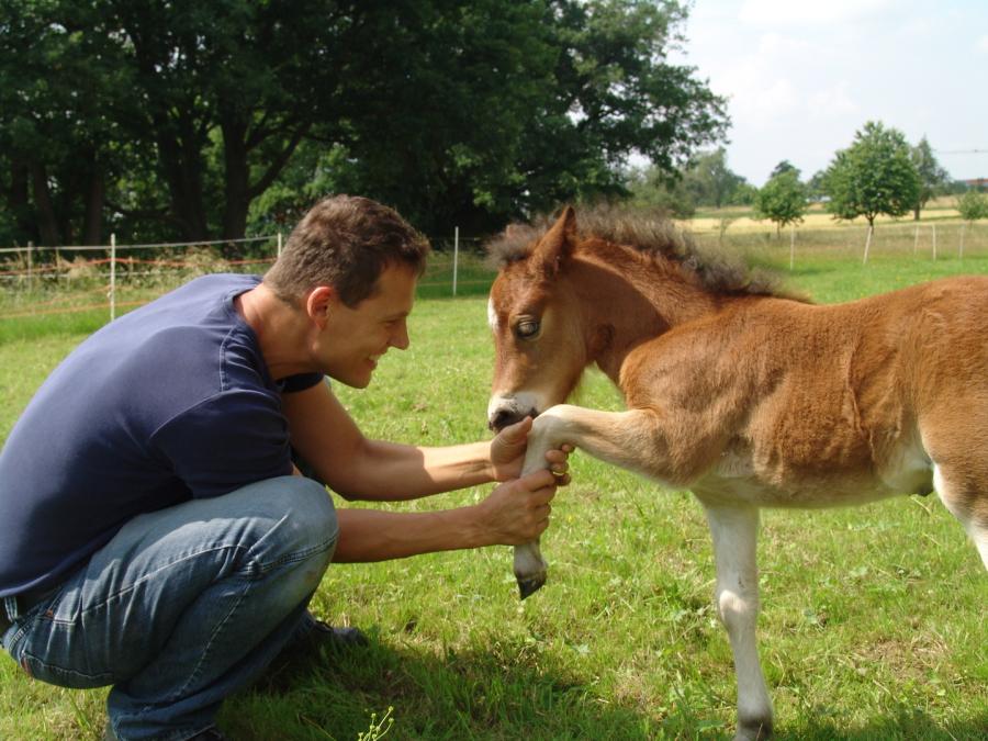 Pferd, Pony, Fohlen