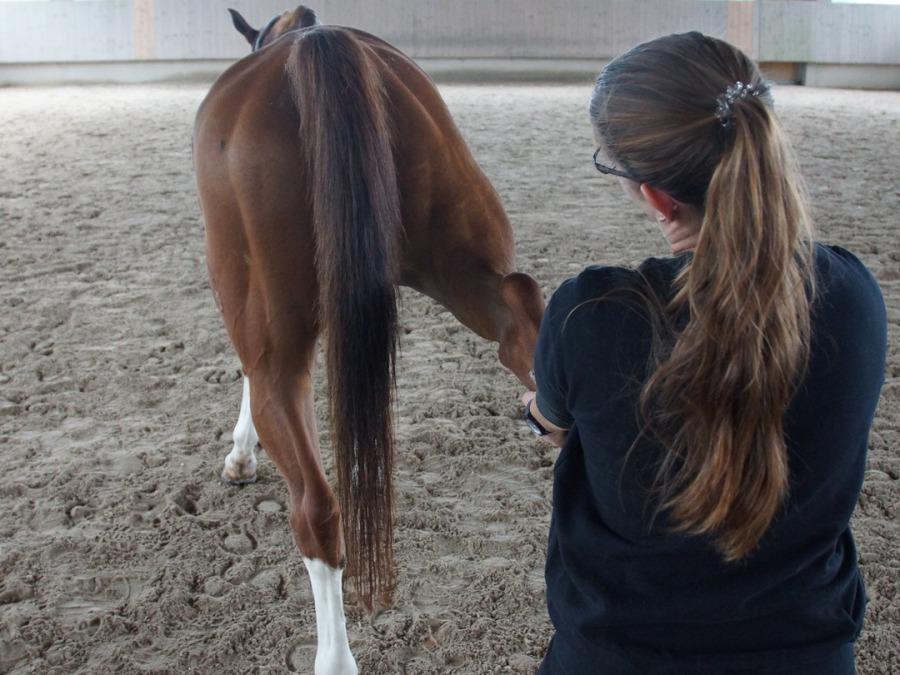 Pferd steht schief